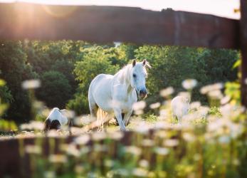BPJEPS AE Activités Equestres